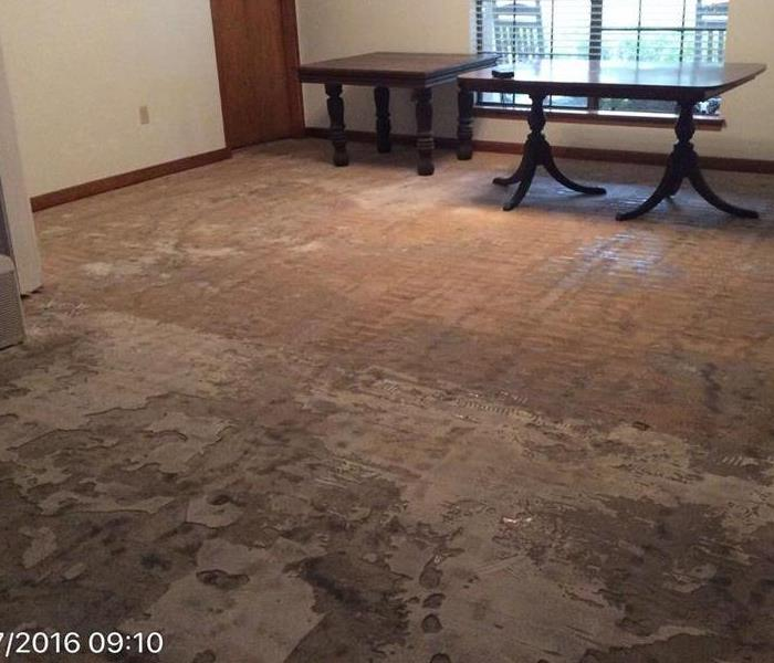 Baton Rouge LA Mold Removal and Mold Remediation