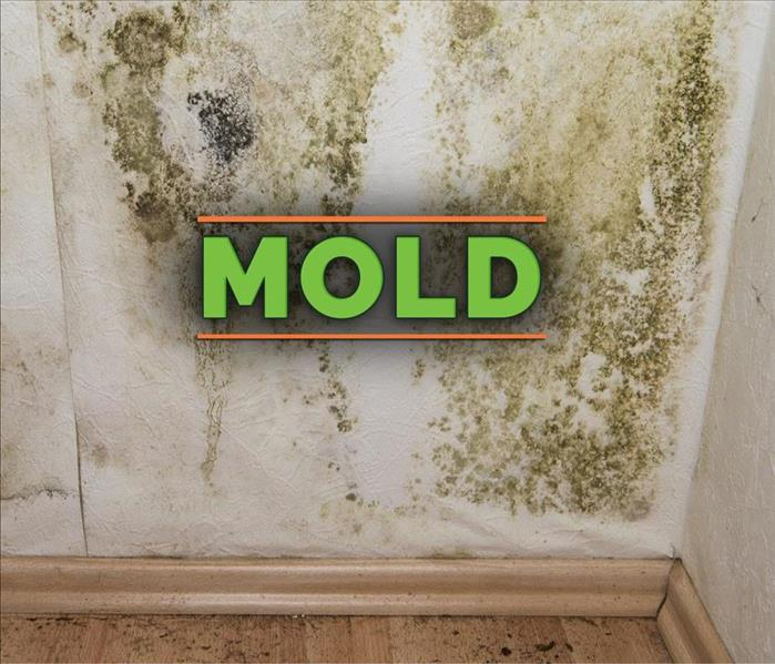 Green mold growth on wall